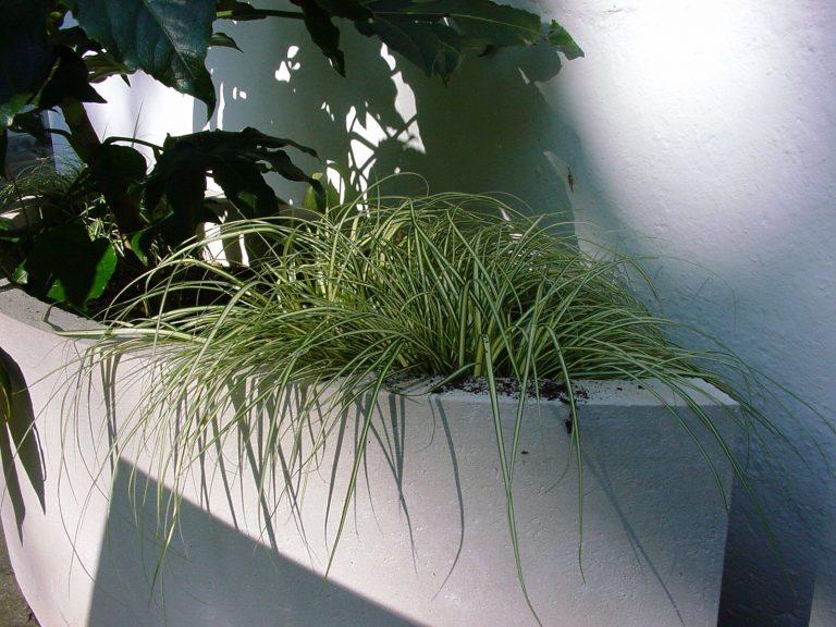 Elliptical Planter